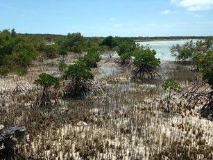 Mangroves_HBC